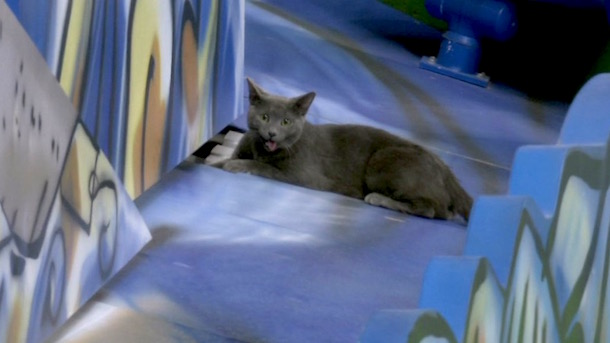 marlins cat