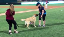 Meet Brooks, the Minor League 'Bat Dog'-in-Training (Videos)