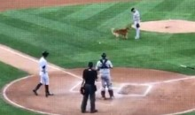 Minor-League Bat Dog Adorably Thinks the Ump Is Trying to Play Fetch (Video)