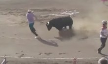 Animal Rights Activists Jumps Into Bullfighting Ring To Protect The Bull, Gets Attacked By Bull (VIDEO)