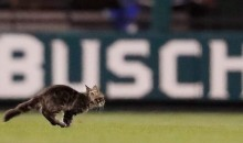 """Rally Cat"" Runs Onto Field During Cards-Royals Game, Yadier Molina Hits Grand Slam on Next Pitch (Video)"