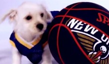 Warriors Use Puppies to Get Fans Excited About 2017-18 Season Schedule (Videos + Tweets)