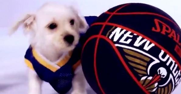 warriors-puppies