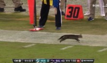 Tony Romo Gave Us The Most Hilarious Play-By-Play For This Kitten On The Field During TNF (VIDEO)