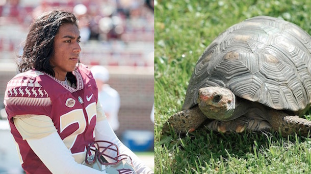 Ricky Aguayo Murdered Turtle