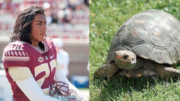 Ricky Aguayo Murdered Turtle