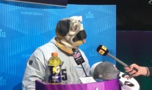 Players Dressed as Dogs? Reporters Dressed as Sharks? Must Be Super Bowl Media Day (VIDEOS)
