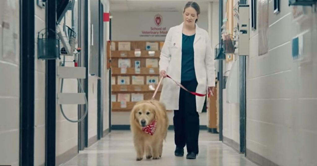 CEO Takes Out $6M Super Bowl Ad About His Dog